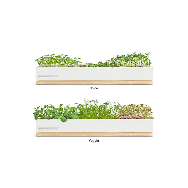 Micro-Green Kits - Veggy