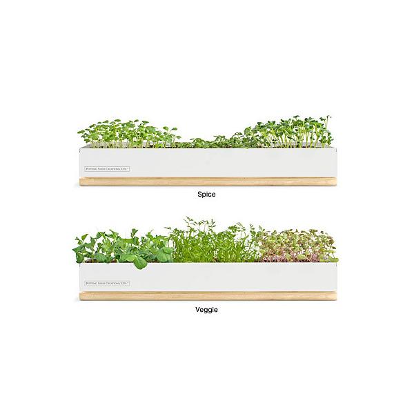Micro-Green Kits - Veggy